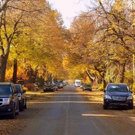les arbres et la sécrurité routière